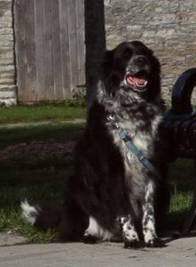 Griff, a dog star