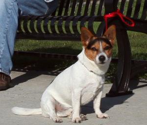 Percy, a dog star.